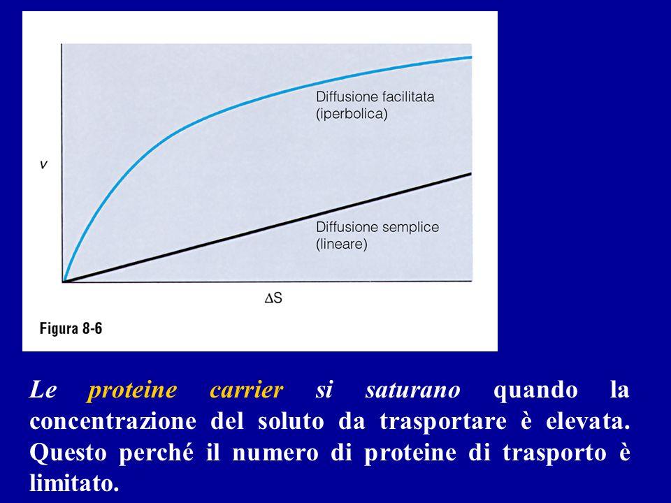 Le proteine carrier si saturano quando la concentrazione del soluto da trasportare è elevata. Questo perché il numero di proteine di trasporto è limit