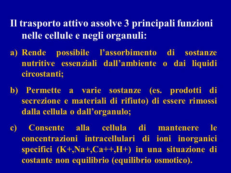 Il trasporto attivo assolve 3 principali funzioni nelle cellule e negli organuli: a)Rende possibile lassorbimento di sostanze nutritive essenziali dal