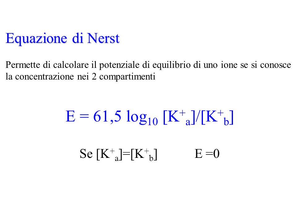 Equazione di Nerst Permette di calcolare il potenziale di equilibrio di uno ione se si conosce la concentrazione nei 2 compartimenti E = 61,5 log 10 [