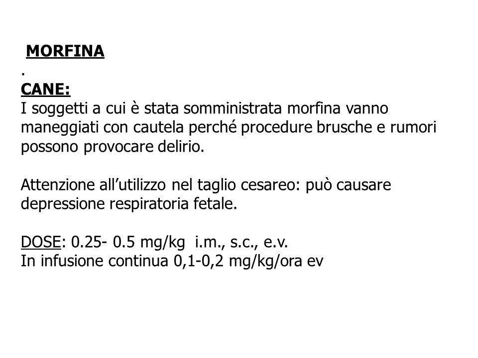 MORFINA. CANE: I soggetti a cui è stata somministrata morfina vanno maneggiati con cautela perché procedure brusche e rumori possono provocare delirio