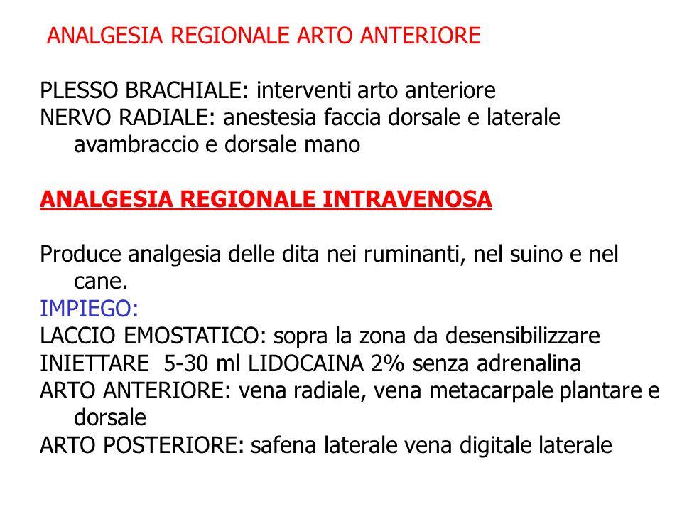 ANALGESIA REGIONALE ARTO ANTERIORE PLESSO BRACHIALE: interventi arto anteriore NERVO RADIALE: anestesia faccia dorsale e laterale avambraccio e dorsal