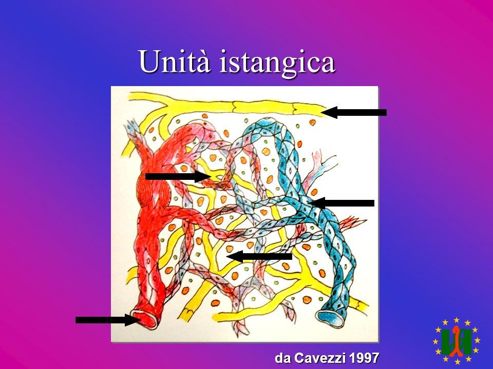 Unità istangica da Cavezzi 1997