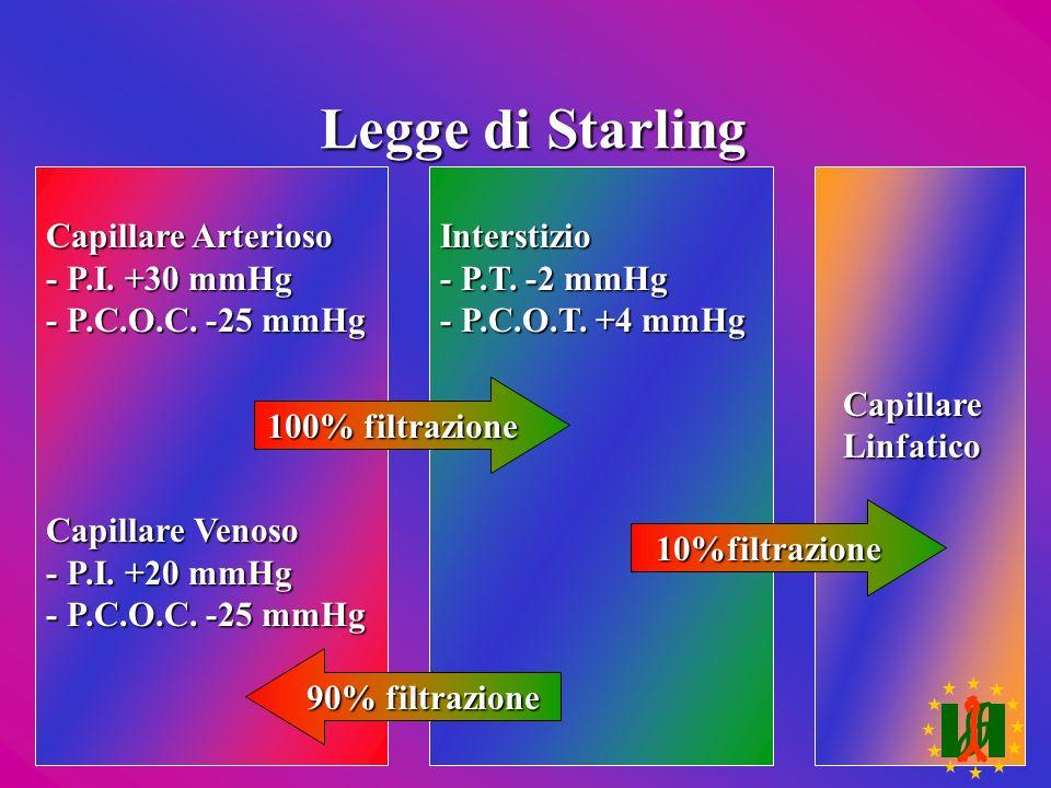 Legge di Starling Capillare Arterioso - P.I. +30 mmHg - P.C.O.C. -25 mmHg Capillare Venoso - P.I. +20 mmHg - P.C.O.C. -25 mmHg Interstizio - P.T. -2 m