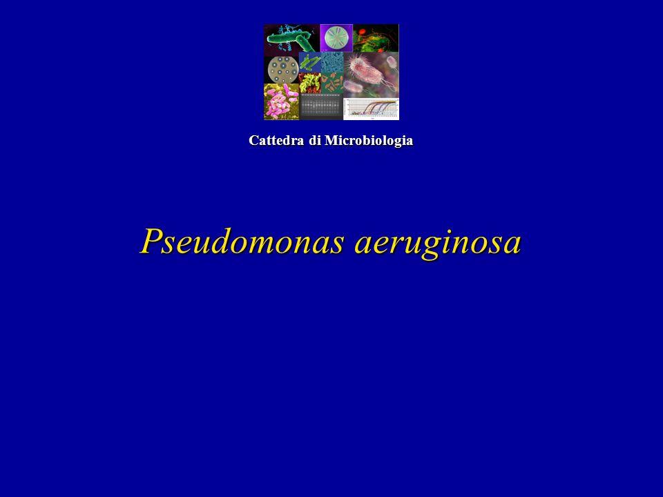 Pseudomonas aeruginosa Cattedra di Microbiologia