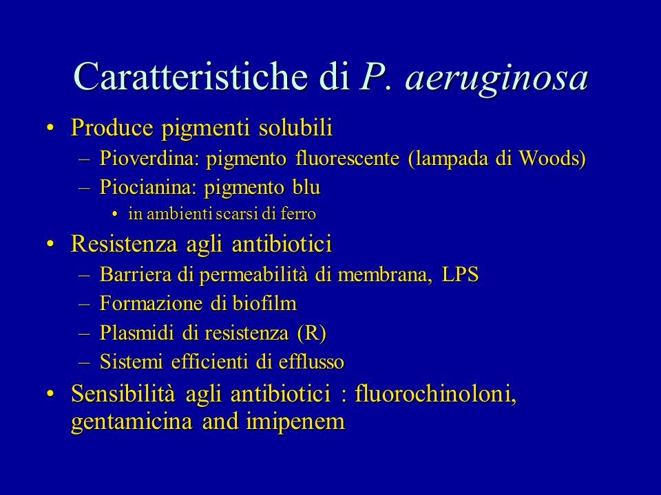 Caratteristiche di P. aeruginosa Produce pigmenti solubiliProduce pigmenti solubili –Pioverdina: pigmento fluorescente (lampada di Woods) –Piocianina: