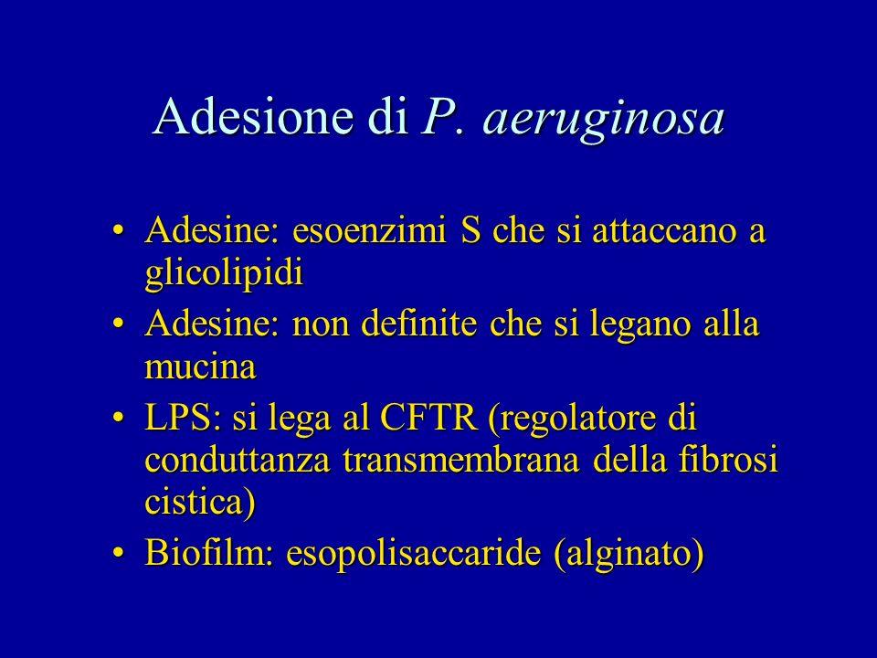 Adesione di P. aeruginosa Adesine: esoenzimi S che si attaccano a glicolipidiAdesine: esoenzimi S che si attaccano a glicolipidi Adesine: non definite