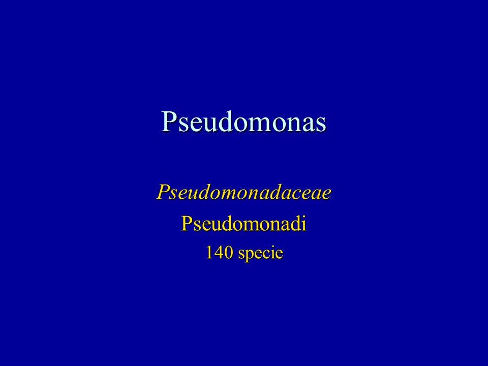 Pseudomonas PseudomonadaceaePseudomonadi 140 specie