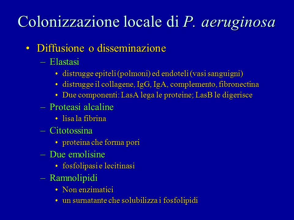 Colonizzazione locale di P. aeruginosa Diffusione o disseminazioneDiffusione o disseminazione –Elastasi distrugge epiteli (polmoni) ed endoteli (vasi