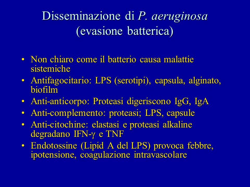 Disseminazione di P. aeruginosa (evasione batterica) Non chiaro come il batterio causa malattie sistemicheNon chiaro come il batterio causa malattie s