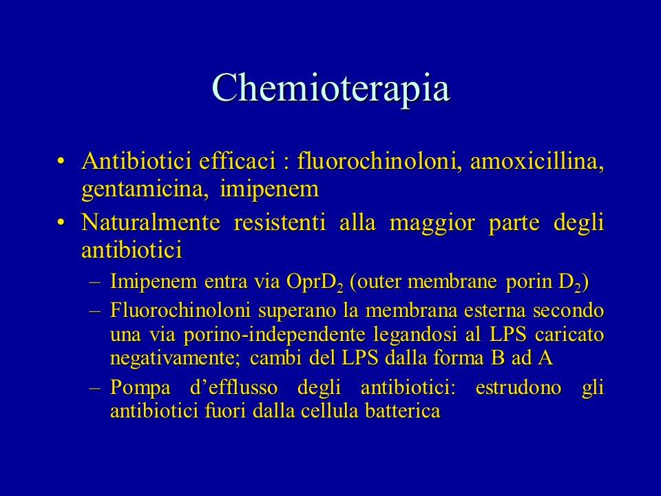 Chemioterapia Antibiotici efficaci : fluorochinoloni, amoxicillina, gentamicina, imipenemAntibiotici efficaci : fluorochinoloni, amoxicillina, gentami