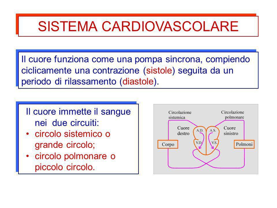 Il cuore funziona come una pompa sincrona, compiendo ciclicamente una contrazione (sistole) seguita da un periodo di rilassamento (diastole). Il cuore