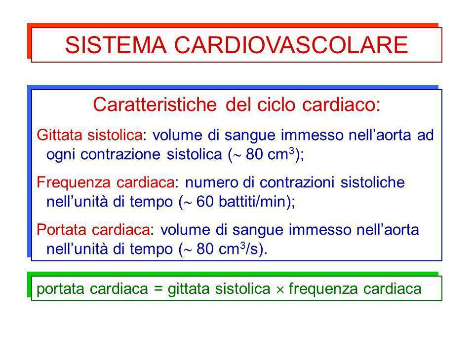Caratteristiche del ciclo cardiaco: Gittata sistolica: volume di sangue immesso nellaorta ad ogni contrazione sistolica ( 80 cm 3 ); Frequenza cardiac