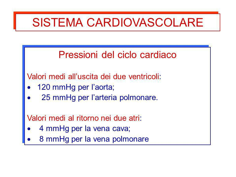 Pressioni del ciclo cardiaco Valori medi alluscita dei due ventricoli: 120 mmHg per laorta; 25 mmHg per larteria polmonare. Valori medi al ritorno nei