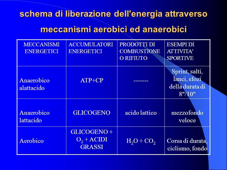 schema di liberazione dell energia attraverso meccanismi aerobici ed anaerobici MECCANISMI ENERGETICI ACCUMULATORI ENERGETICI PRODOTTI DI COMBUSTIONE O RIFIUTO ESEMPI DI ATTIVITA SPORTIVE Anaerobico alattacido ATP+CP------- Sprint, salti, lanci, sfozi della durata di 8 /10 Anaerobico lattacido GLICOGENOacido latticomezzofondo veloce Aerobico GLICOGENO + O 2 + ACIDI GRASSI H 2 O + CO 2 Corsa di durata, ciclismo, fondo