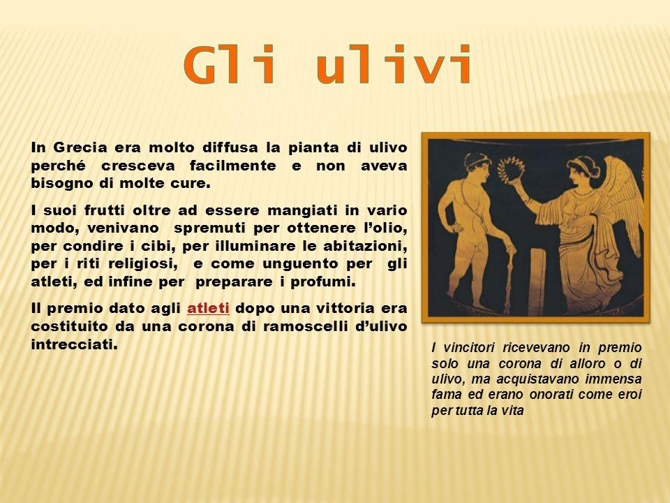 In Grecia era molto diffusa la pianta di ulivo perché cresceva facilmente e non aveva bisogno di molte cure. I suoi frutti oltre ad essere mangiati in