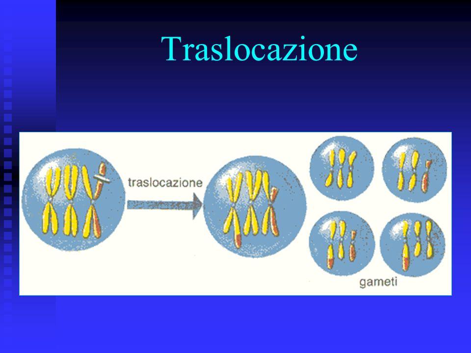…altre mutazioni cromosomiche Unaltra tipologia di mutazioni cromosomiche è data dal riarrangiamento cromosomico Unaltra tipologia di mutazioni cromos
