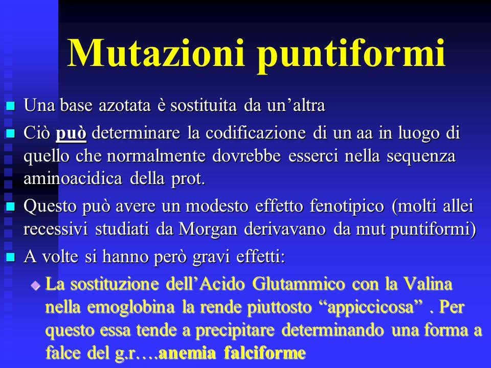Varie tipologie di mutazioni geniche Mutazioni puntiformi Mutazioni puntiformi Delezioni Delezioni Inserzioni Inserzioni