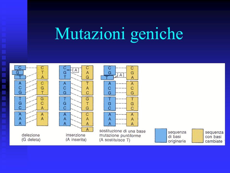 Inserzioni e delezioni : un nucleotide viene erroneamente inserito nella sequenza nucleotidica Inserzione: un nucleotide viene erroneamente inserito n