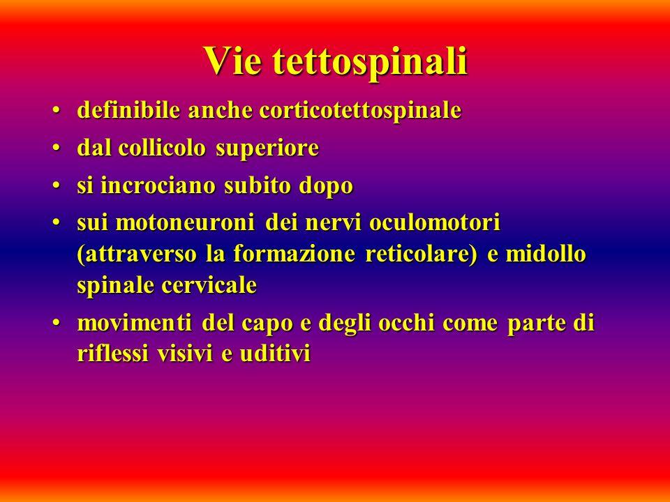 Vie tettospinali definibile anche corticotettospinaledefinibile anche corticotettospinale dal collicolo superioredal collicolo superiore si incrociano