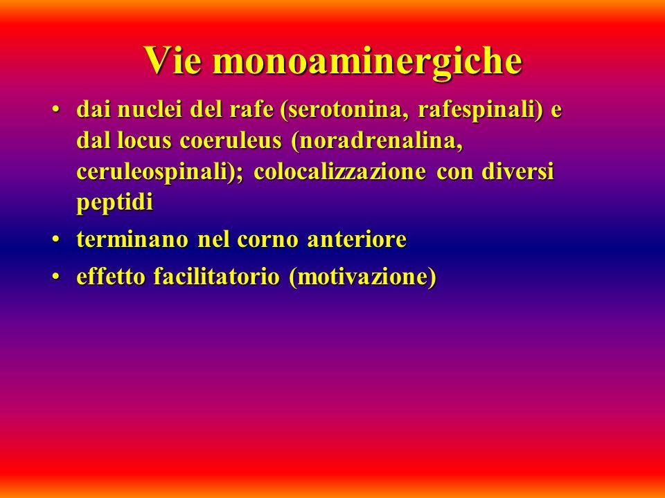 Vie monoaminergiche dai nuclei del rafe (serotonina, rafespinali) e dal locus coeruleus (noradrenalina, ceruleospinali); colocalizzazione con diversi