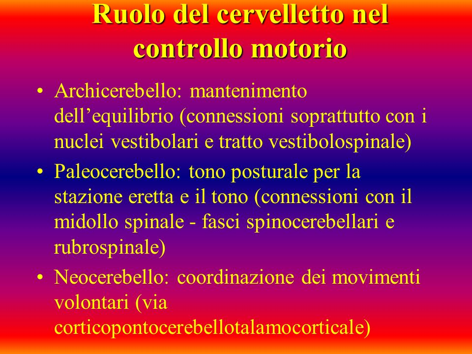 Ruolo del cervelletto nel controllo motorio Archicerebello: mantenimento dellequilibrio (connessioni soprattutto con i nuclei vestibolari e tratto ves