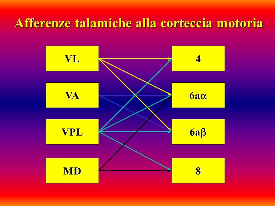 VL VA VPL MD 4 6a 6a 8 Afferenze talamiche alla corteccia motoria