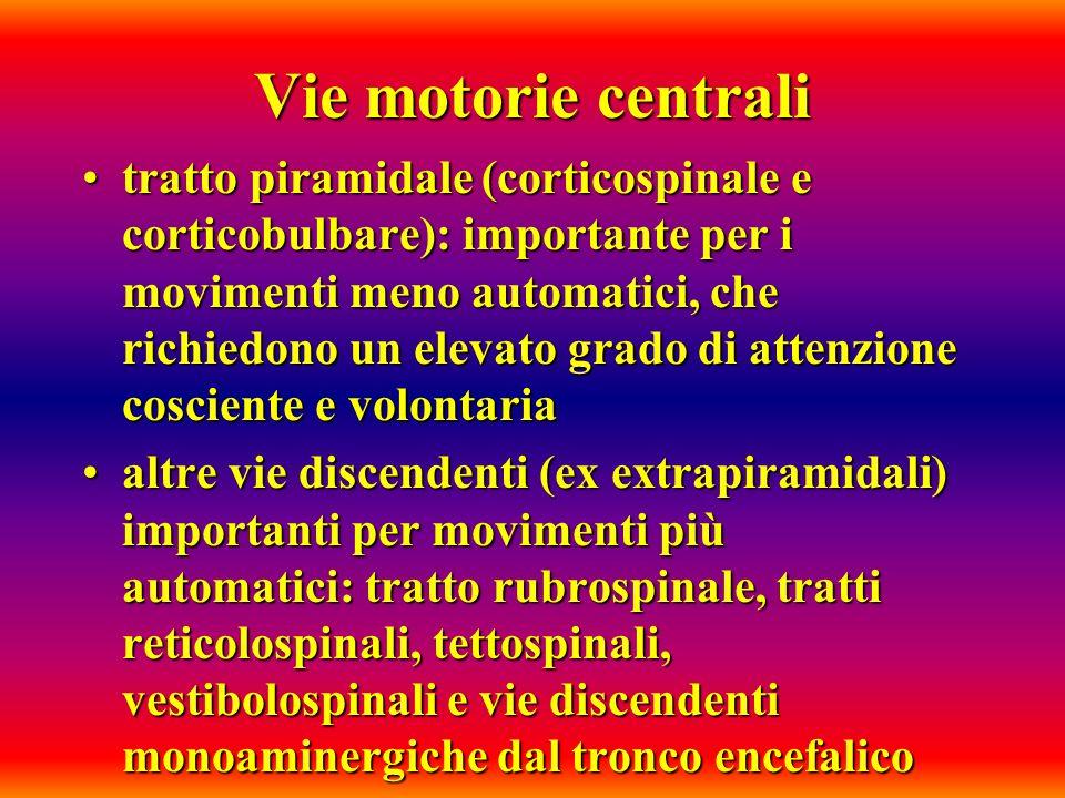 Vie motorie centrali tratto piramidale (corticospinale e corticobulbare): importante per i movimenti meno automatici, che richiedono un elevato grado