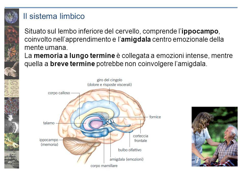 Il sistema limbico Situato sul lembo inferiore del cervello, comprende lippocampo, coinvolto nellapprendimento e lamigdala centro emozionale della men