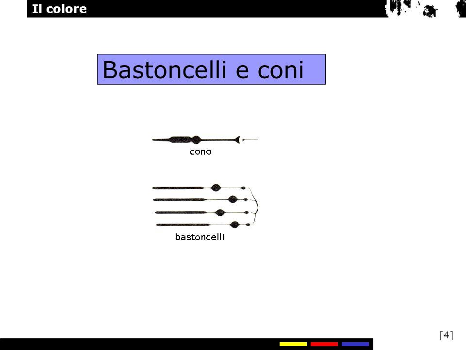 Il colore [5] Bastoncelli e coni I bastoncelli funzionano alle basse intensità della luce e sono responsabili della visione in condizione di luce scarsa.