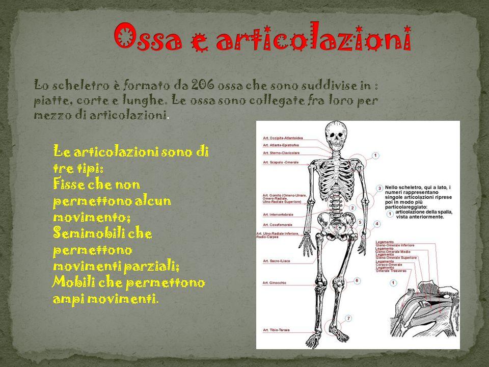 Lo scheletro è formato da 206 ossa che sono suddivise in : piatte, corte e lunghe. Le ossa sono collegate fra loro per mezzo di articolazioni. Le arti