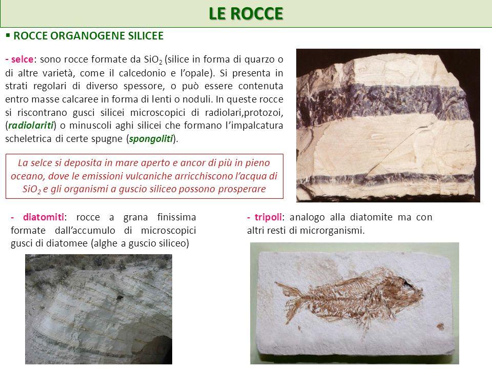 LE ROCCE ROCCE ORGANOGENE SILICEE La selce si deposita in mare aperto e ancor di più in pieno oceano, dove le emissioni vulcaniche arricchiscono lacqua di SiO 2 e gli organismi a guscio siliceo possono prosperare - diatomiti: rocce a grana finissima formate dallaccumulo di microscopici gusci di diatomee (alghe a guscio siliceo) - selce: sono rocce formate da SiO 2 (silice in forma di quarzo o di altre varietà, come il calcedonio e lopale).