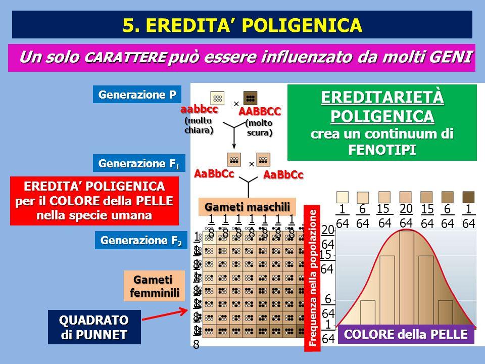 Un solo CARATTERE può essere influenzato da molti GENI EREDITA POLIGENICA per il COLORE della PELLE nella specie umana Generazione P Generazione F 1 G