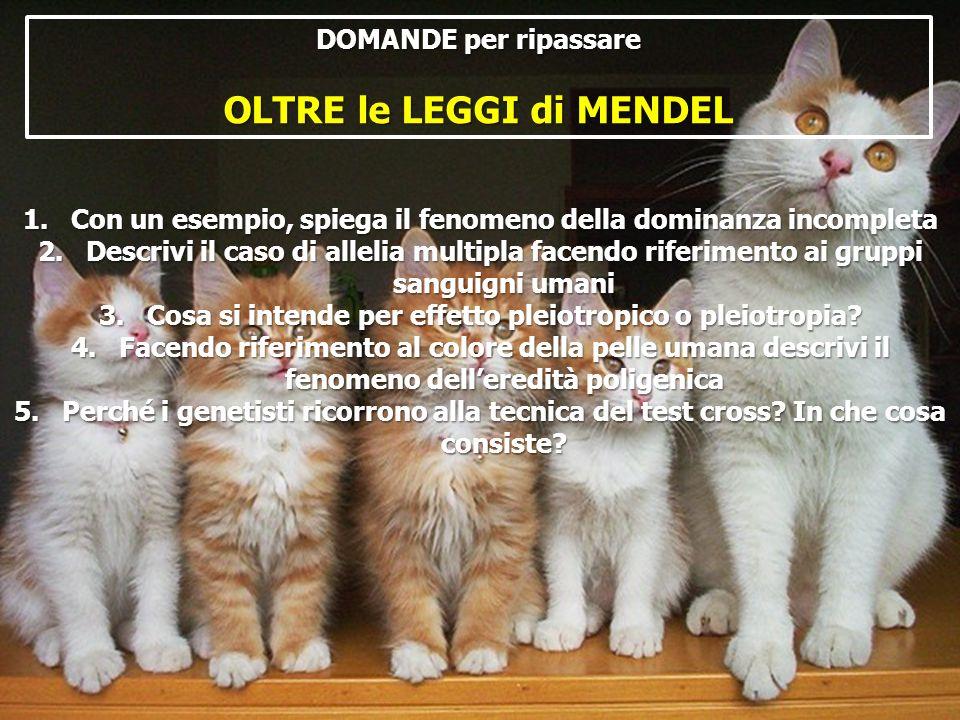 DOMANDE per ripassare OLTRE le LEGGI di MENDEL 1.Con un esempio, spiega il fenomeno della dominanza incompleta 2.Descrivi il caso di allelia multipla