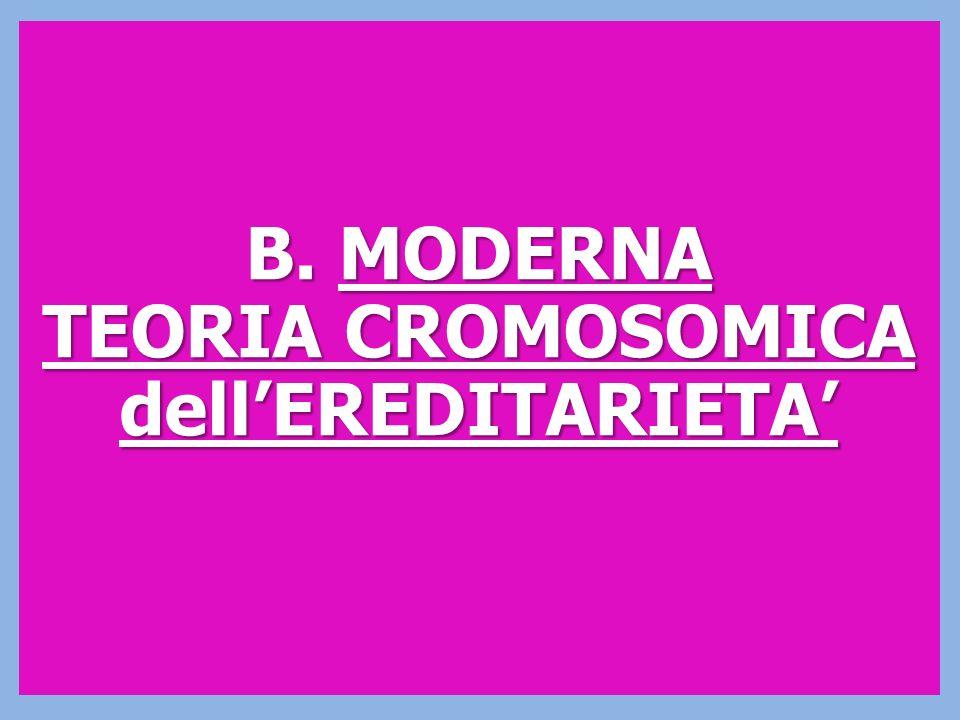 B. MODERNA TEORIA CROMOSOMICA dellEREDITARIETA