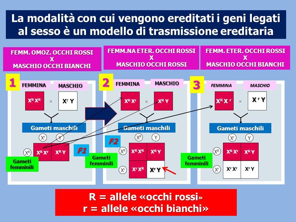 La modalità con cui vengono ereditati i geni legati al sesso è un modello di trasmissione ereditaria FEMMINA MASCHIO Gameti maschili XrXr Y XRXR X r Y
