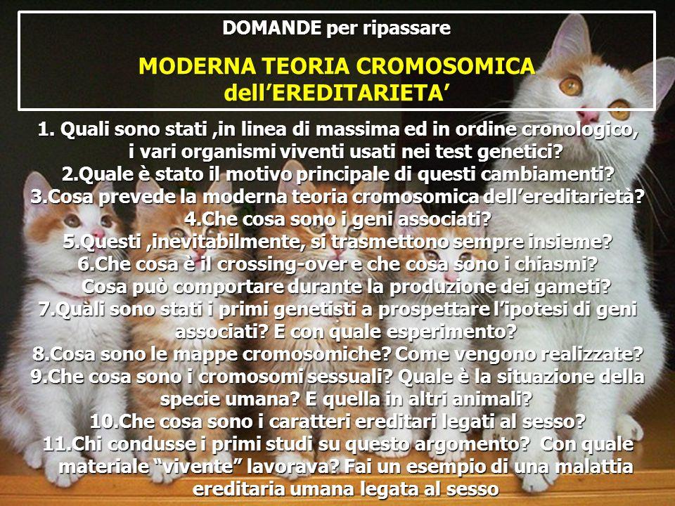 DOMANDE per ripassare MODERNA TEORIA CROMOSOMICA dellEREDITARIETA 1. Quali sono stati,in linea di massima ed in ordine cronologico, i vari organismi v