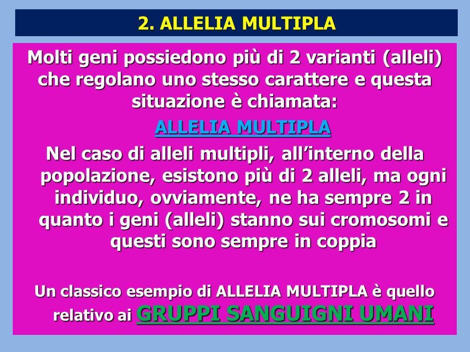 Molti geni possiedono più di 2 varianti (alleli) che regolano uno stesso carattere e questa situazione è chiamata: ALLELIA MULTIPLA ALLELIA MULTIPLA N