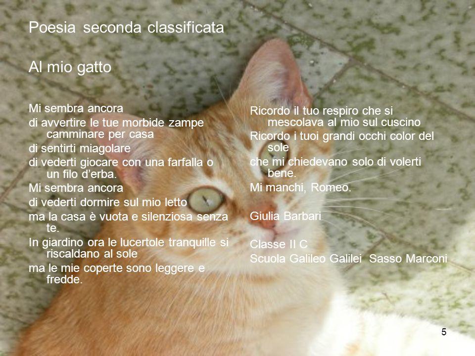 5 Poesia seconda classificata Al mio gatto Mi sembra ancora di avvertire le tue morbide zampe camminare per casa di sentirti miagolare di vederti gioc