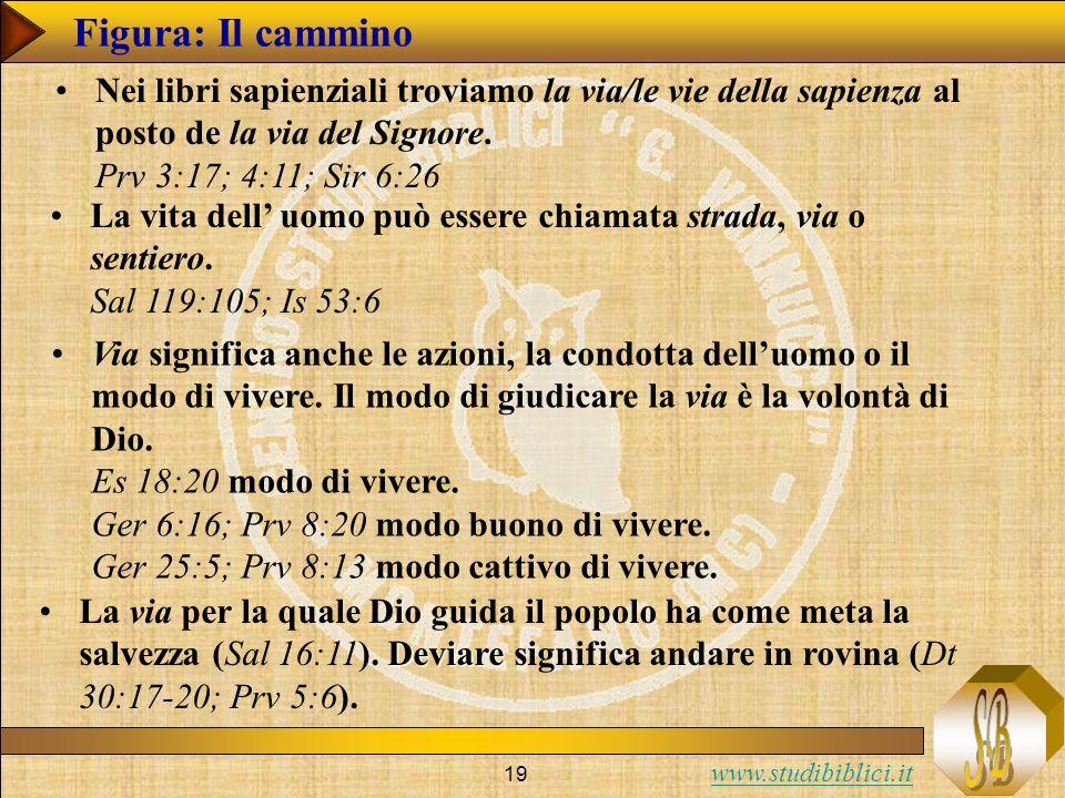 www.studibiblici.it 19 Figura: Il cammino Nei libri sapienziali troviamo la via/le vie della sapienza al posto de la via del Signore. Prv 3:17; 4:11;