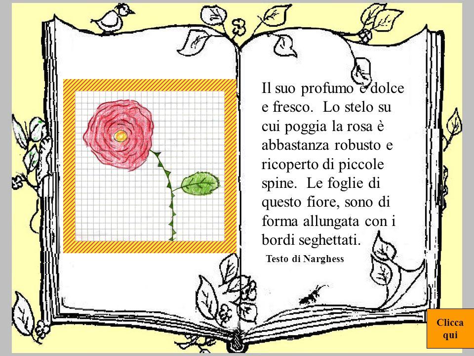 rosa1 E un fiore di colore rosso, ha una forma irregolare, composta da tanti petali che avvolgono un bocciolo. I petali sono vellutati e delicati e al