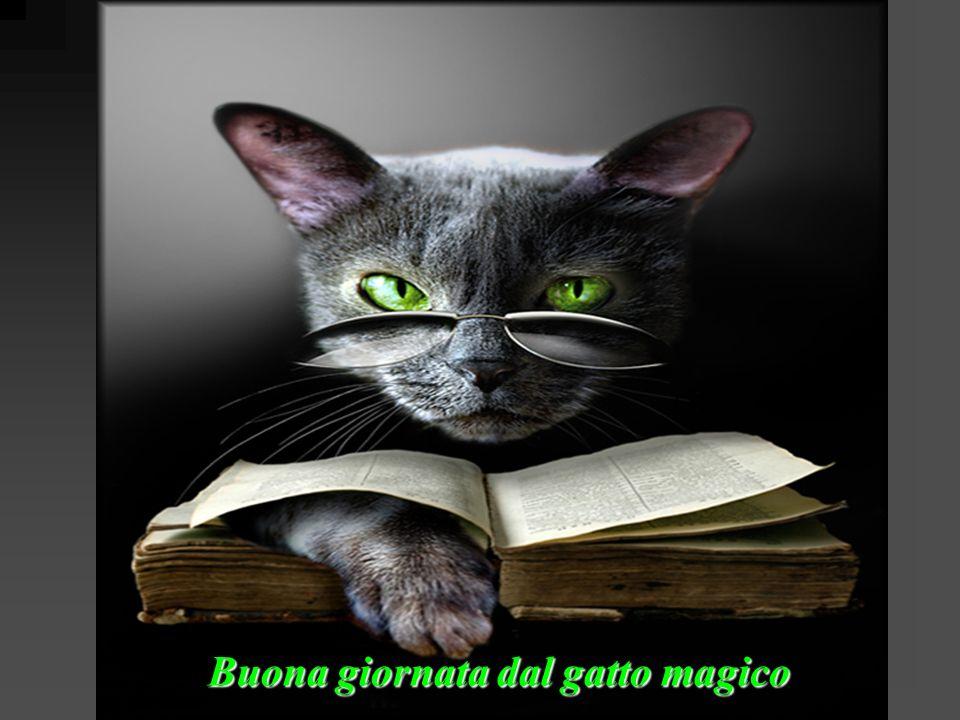 Buona giornata dal gatto magico