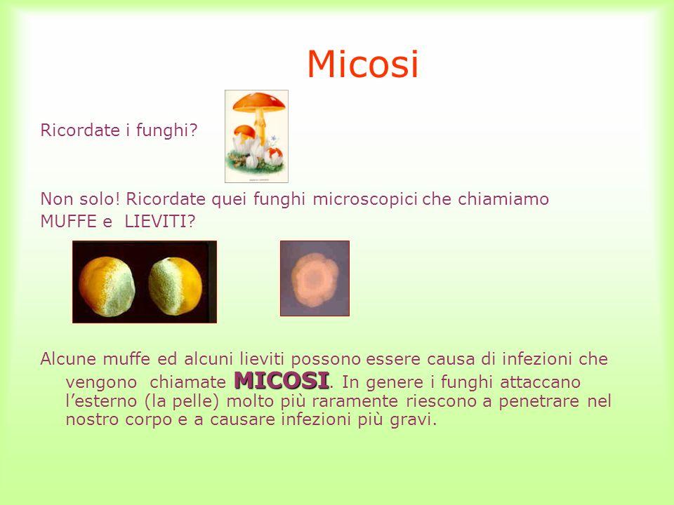 Micosi Ricordate i funghi? Non solo! Ricordate quei funghi microscopici che chiamiamo MUFFE e LIEVITI? MICOSI Alcune muffe ed alcuni lieviti possono e