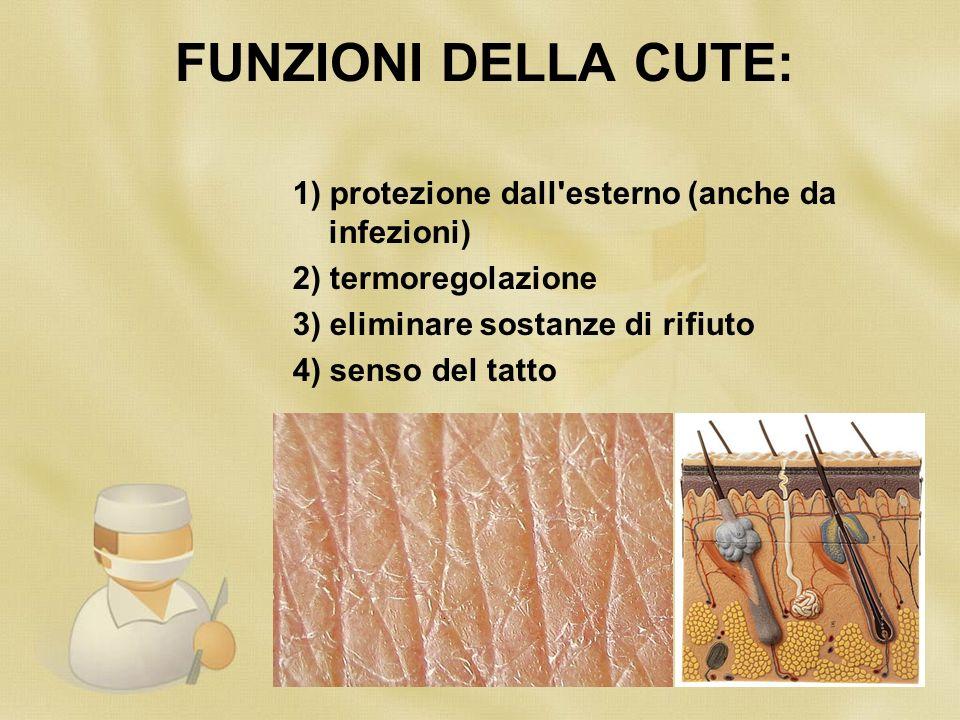 FUNZIONI DELLA CUTE: 1) protezione dall'esterno (anche da infezioni) 2) termoregolazione 3) eliminare sostanze di rifiuto 4) senso del tatto