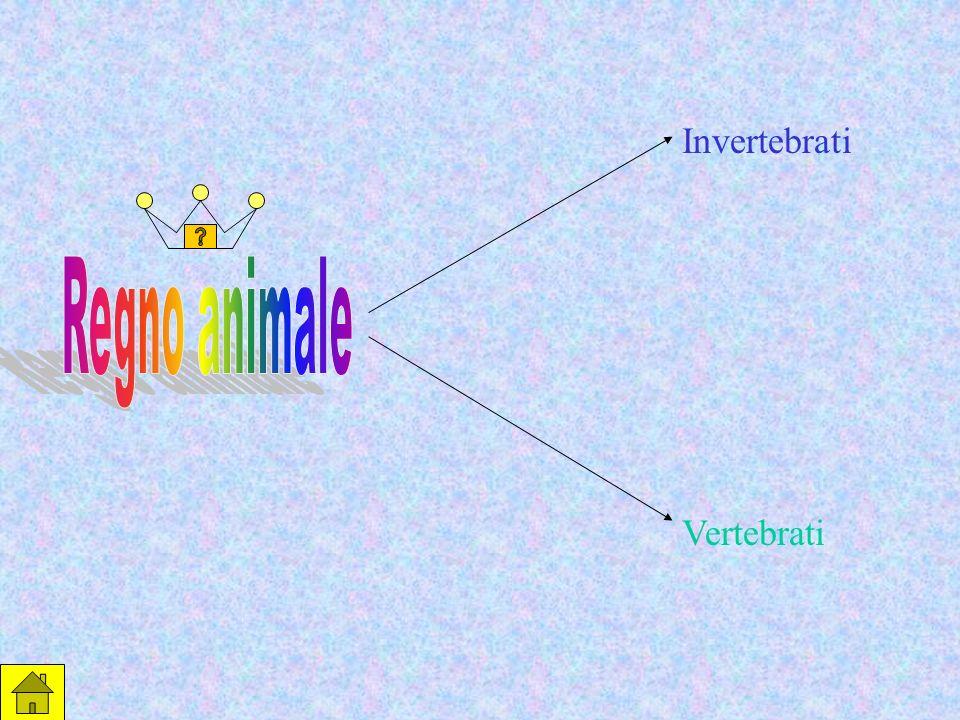 Invertebrati Vertebrati