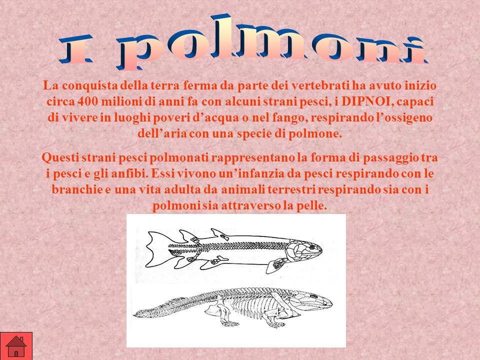 La conquista della terra ferma da parte dei vertebrati ha avuto inizio circa 400 milioni di anni fa con alcuni strani pesci, i DIPNOI, capaci di viver