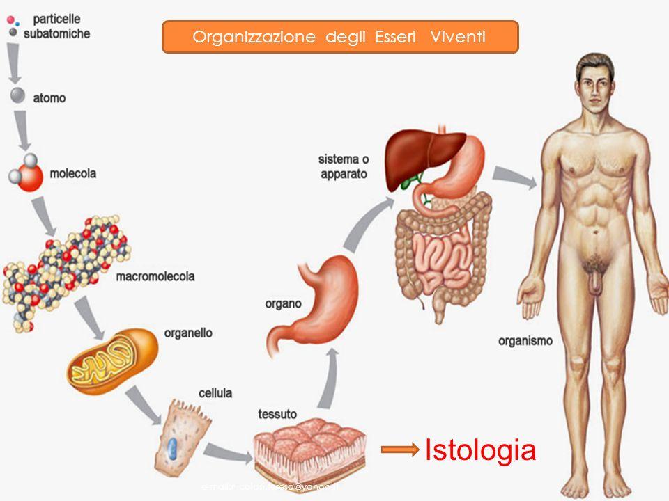 Includono tessuti notevolmente diversi fra loro Forniscono una struttura di sostegno al corpo; Trasportano fluidi e dissolvono sostanze; Proteggono gli organi delicati; Sostengono, circondano e interconnettono tessuti; Immagazzinano energia di riserva; Difendono il corpo dai microrganismi.