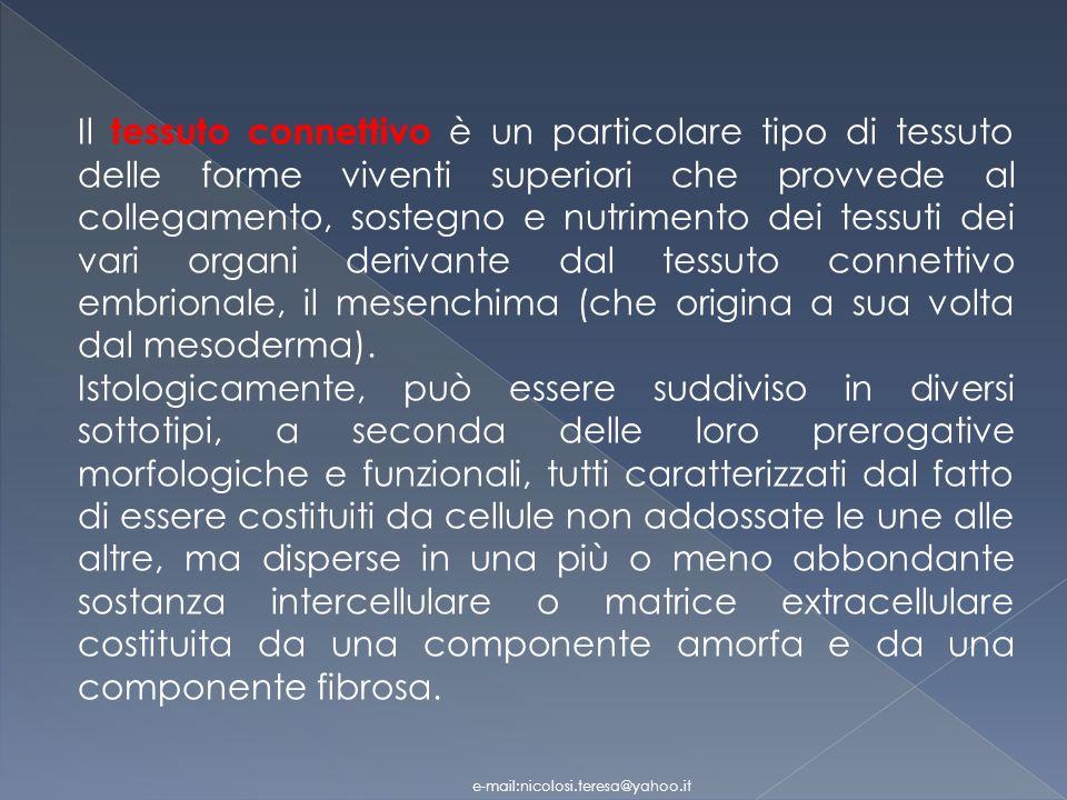 Il tessuto connettivo è un particolare tipo di tessuto delle forme viventi superiori che provvede al collegamento, sostegno e nutrimento dei tessuti dei vari organi derivante dal tessuto connettivo embrionale, il mesenchima (che origina a sua volta dal mesoderma).