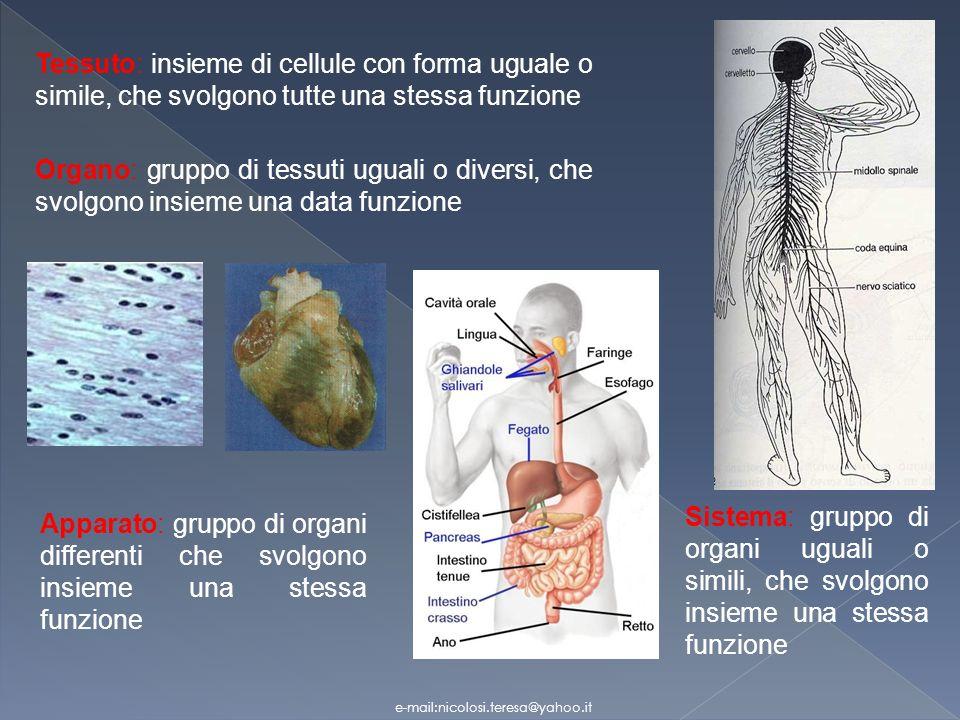 Tessuto nervoso Il tessuto nervoso forma una rete di comunicazione Trasmette le informazioni da una parte allaltra del corpo sotto forma di segnali, o impulsi, nervosi.