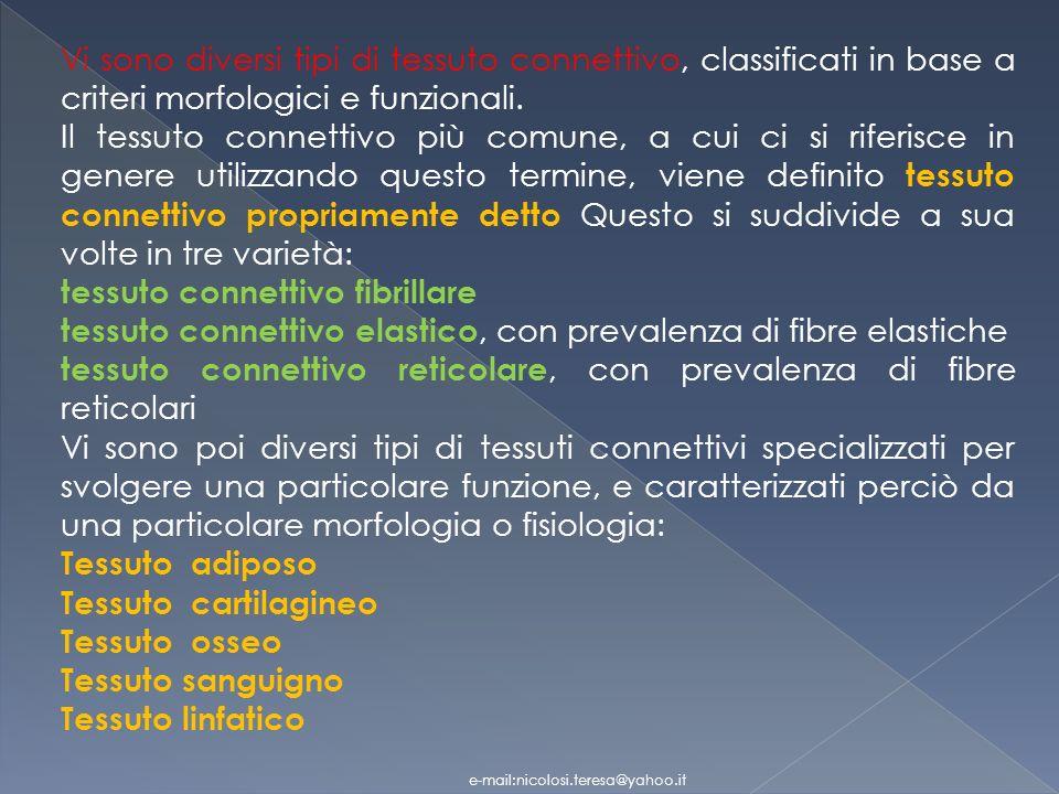 Vi sono diversi tipi di tessuto connettivo, classificati in base a criteri morfologici e funzionali.