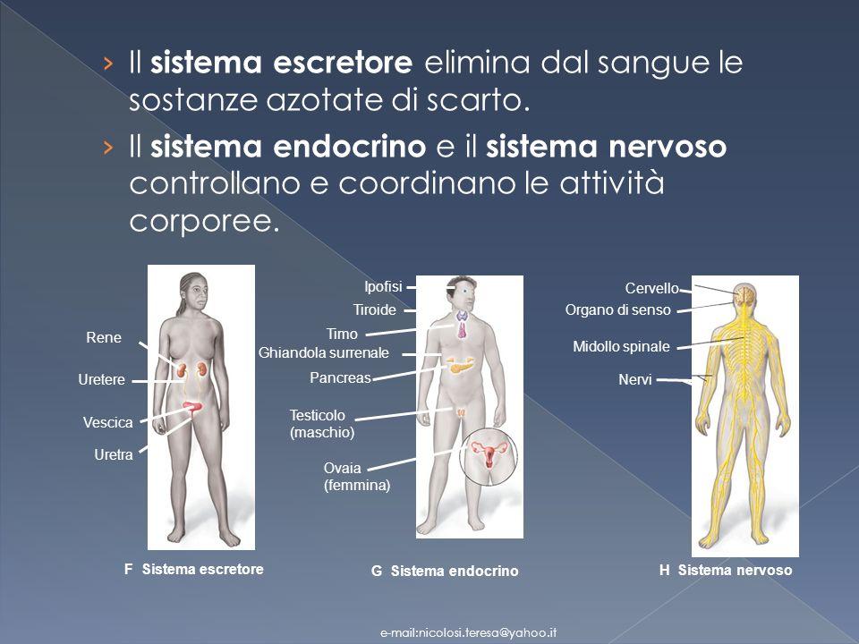 Sono tessuti specializzati per la contrazione Tessuti muscolari e-mail:nicolosi.teresa@yahoo.it